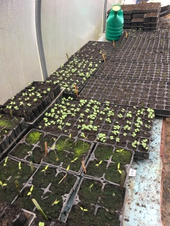 Module trays sprouted