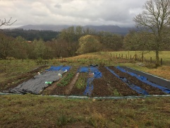 Market Garden Bed preparation nearly there
