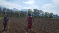 Ruminating in the field